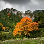 Ruta fotográfica: Hayedo del Retaule