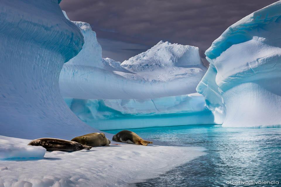 antartida-viaje-fotografico-23.jpg