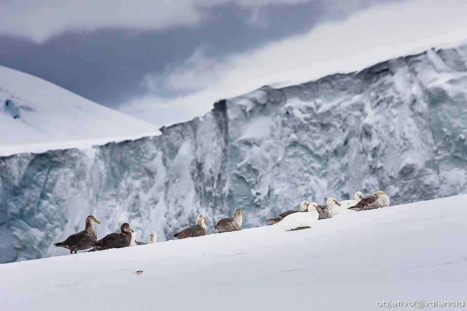 antartida-viaje-fotografico-26.jpg