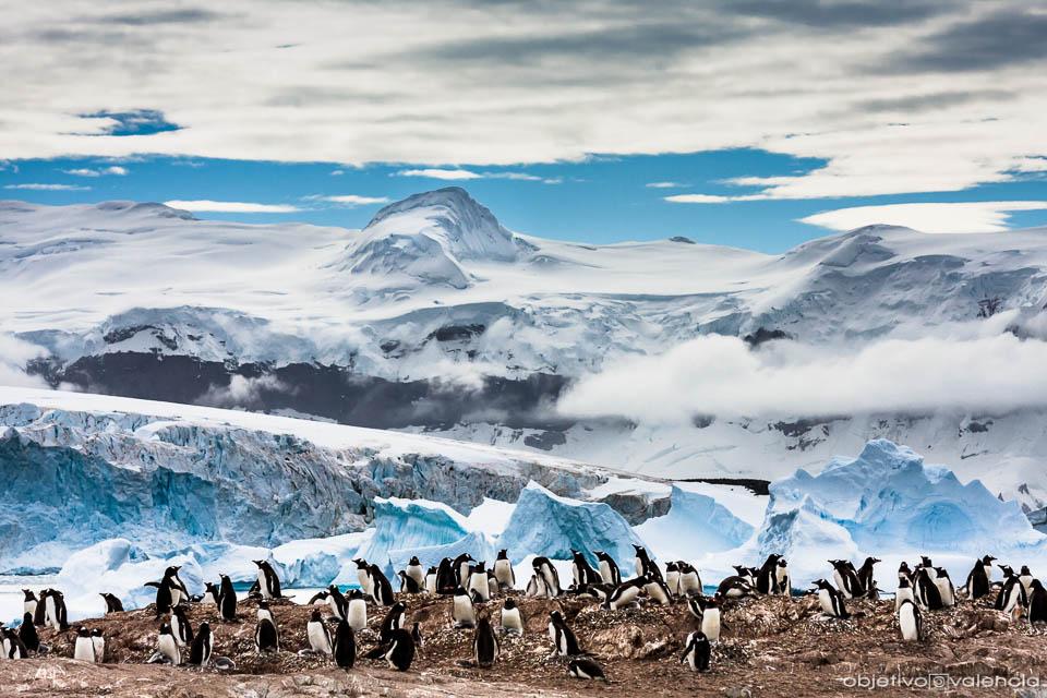 antartida-viaje-fotografico-4.jpg