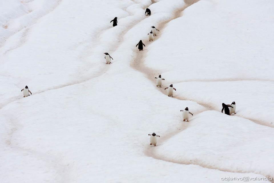 antartida-viaje-fotografico-8.jpg