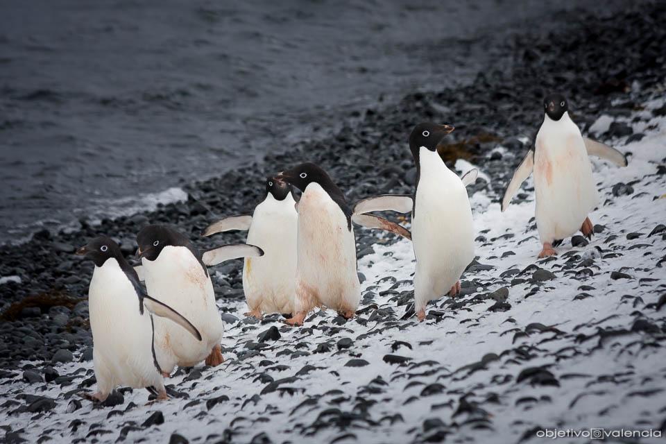 Charla y presentación nuevo viaje fotográfico Antártida 2019