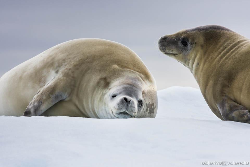 antartida-viaje-fotografico-ushuaia-6.jpg