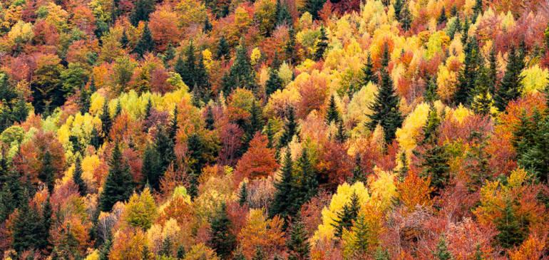 Consejos para fotografiar el otoño