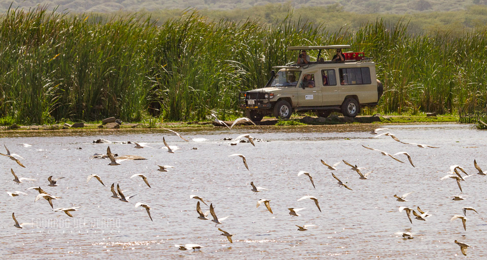 viaje-fotografico-kenia-masai-mara-safari-10.jpg