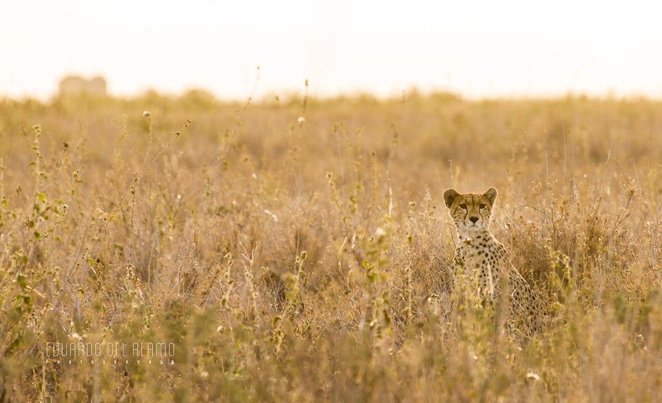 viaje-fotografico-kenia-masai-mara-safari-13.jpg