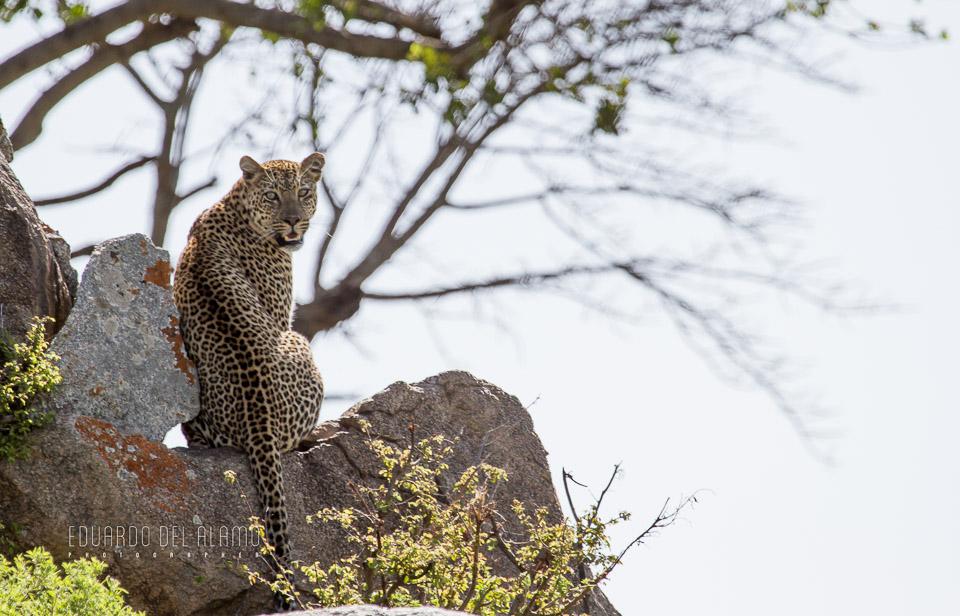 viaje-fotografico-kenia-masai-mara-safari-14.jpg