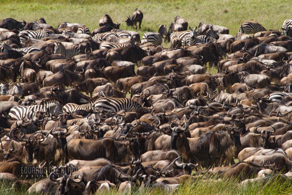 viaje-fotografico-kenia-masai-mara-safari-15.jpg