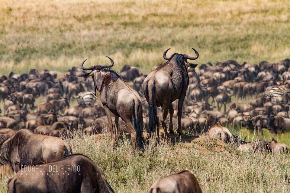 viaje-fotografico-kenia-masai-mara-safari-16.jpg