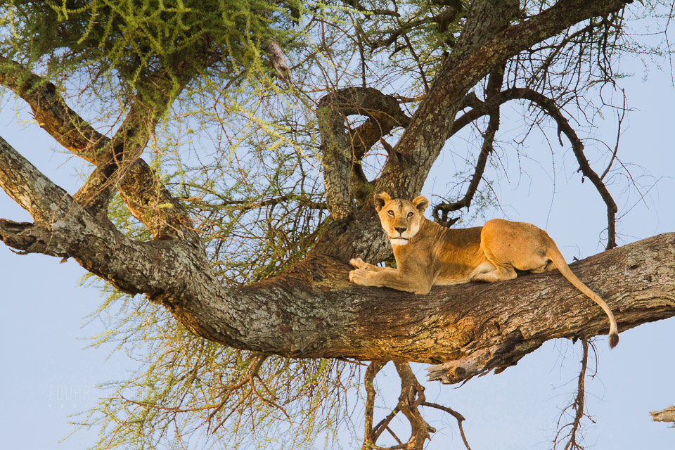 viaje-fotografico-kenia-masai-mara-safari-19.jpg