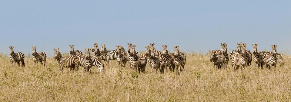 viaje-fotografico-kenia-masai-mara-safari-22.jpg