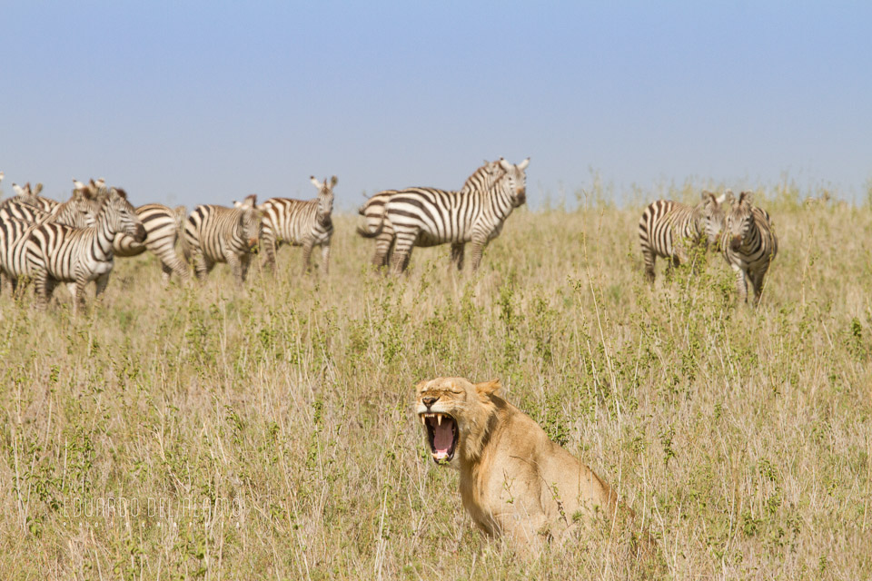 viaje-fotografico-kenia-masai-mara-safari-23.jpg