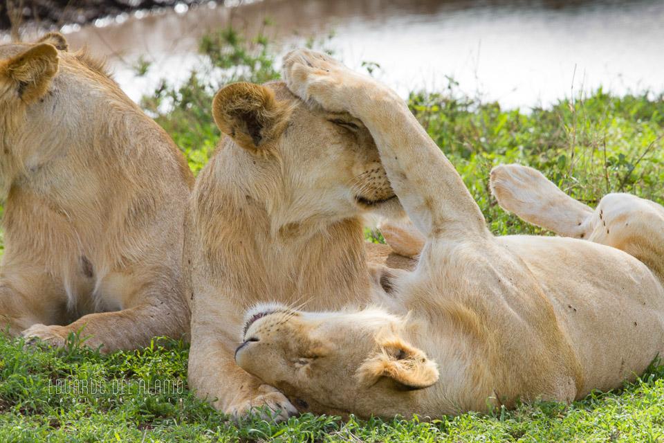 viaje-fotografico-kenia-masai-mara-safari-24.jpg