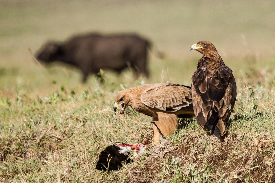 viaje-fotografico-kenia-masai-mara-safari-26.jpg