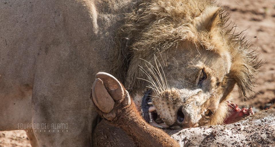 viaje-fotografico-kenia-masai-mara-safari-3.jpg