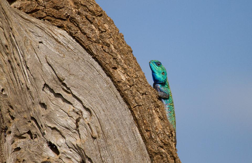 viaje-fotografico-kenia-masai-mara-safari-33.jpg