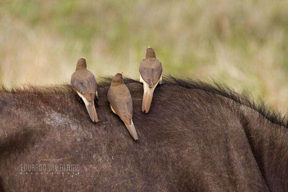 viaje-fotografico-kenia-masai-mara-safari-34.jpg