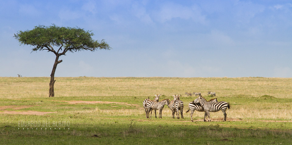 viaje-fotografico-kenia-masai-mara-safari-35.jpg