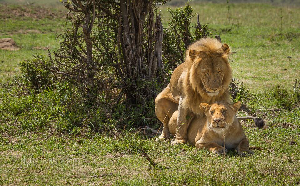 viaje-fotografico-kenia-masai-mara-safari-36.jpg
