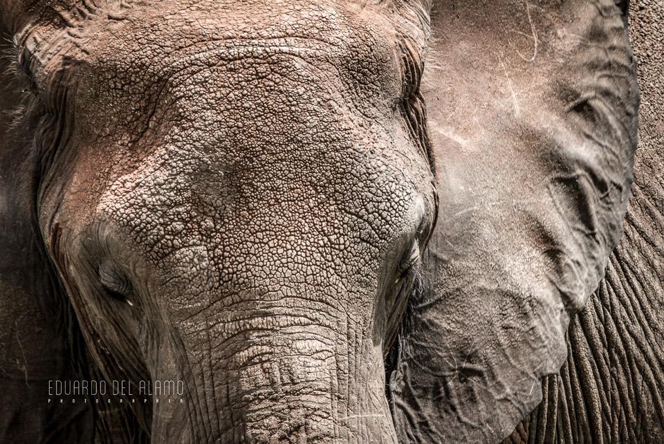 viaje-fotografico-kenia-masai-mara-safari-38.jpg