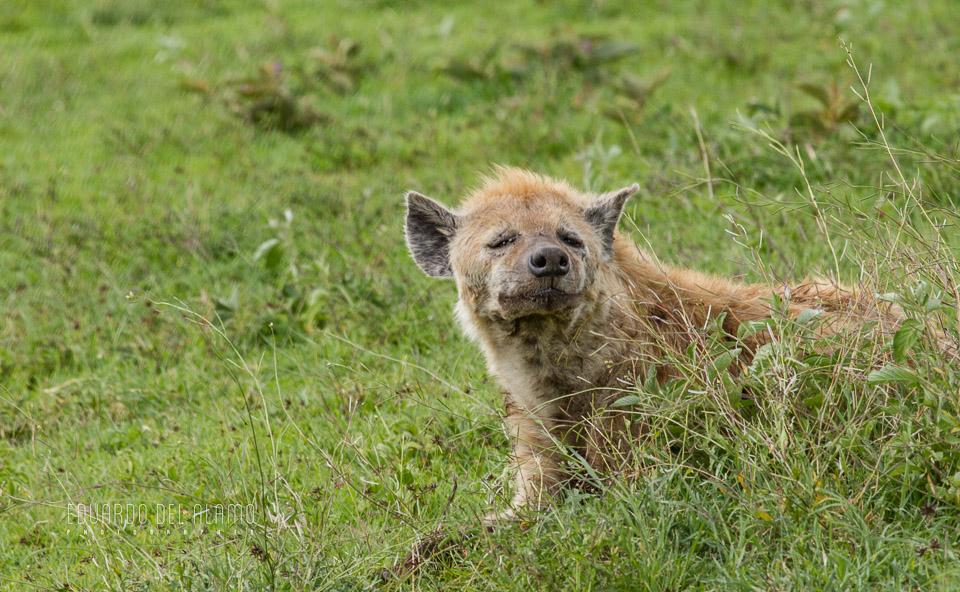 viaje-fotografico-kenia-masai-mara-safari-43.jpg
