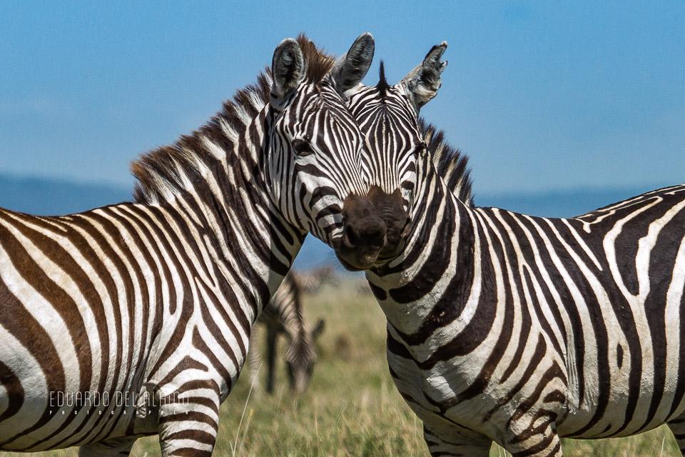 viaje-fotografico-kenia-masai-mara-safari-45.jpg