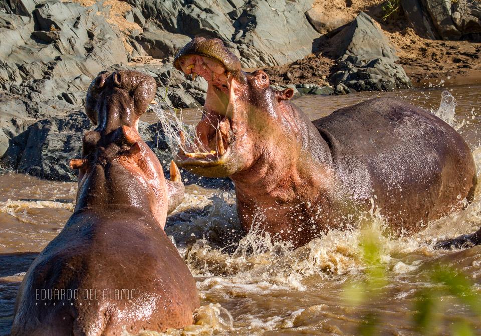 viaje-fotografico-kenia-masai-mara-safari-48.jpg
