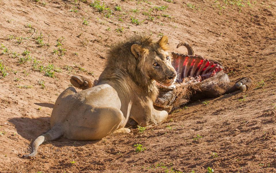 viaje-fotografico-kenia-masai-mara-safari-5.jpg