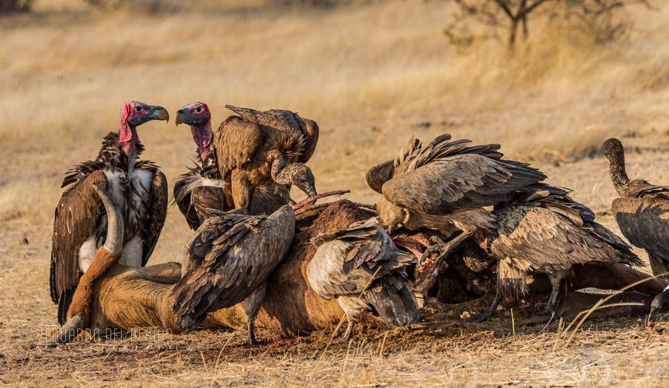 viaje-fotografico-kenia-masai-mara-safari-50.jpg