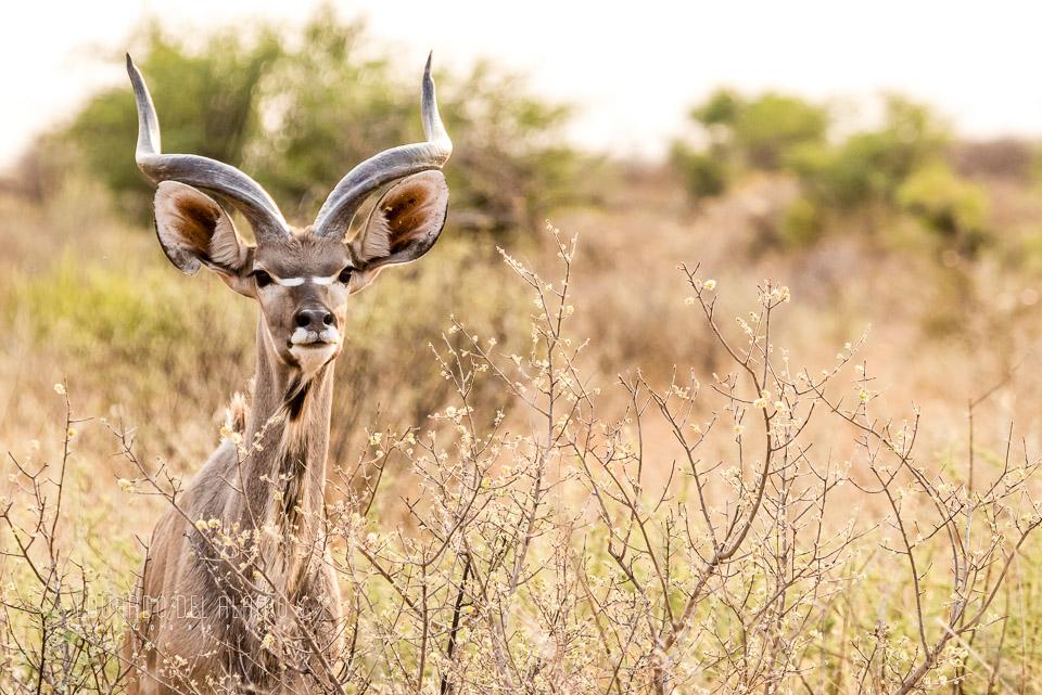 viaje-fotografico-kenia-masai-mara-safari-51.jpg
