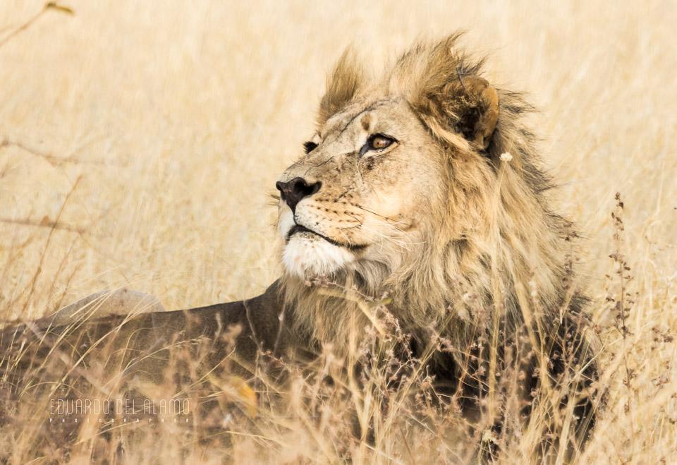 viaje-fotografico-kenia-masai-mara-safari-52.jpg