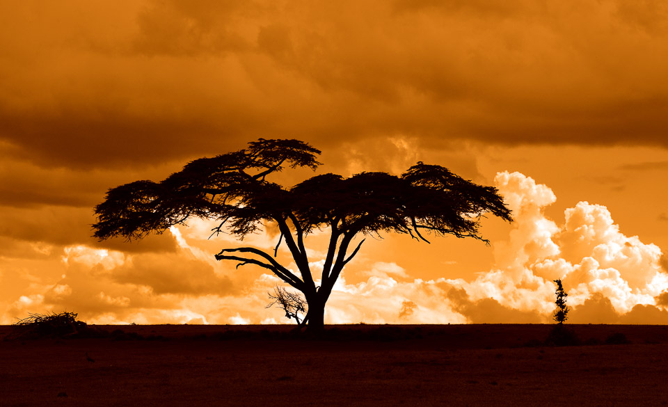 viaje-fotografico-kenia-masai-mara-safari-58.jpg