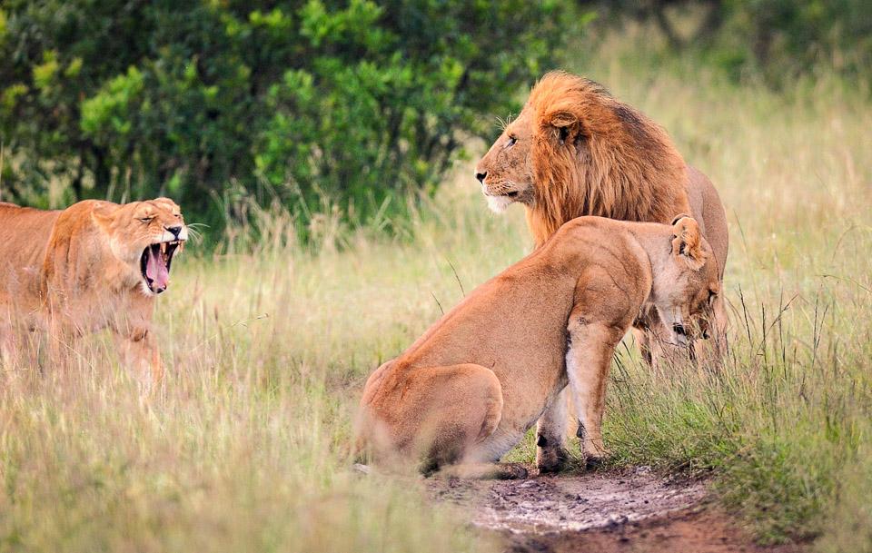 viaje-fotografico-kenia-masai-mara-safari-59.jpg