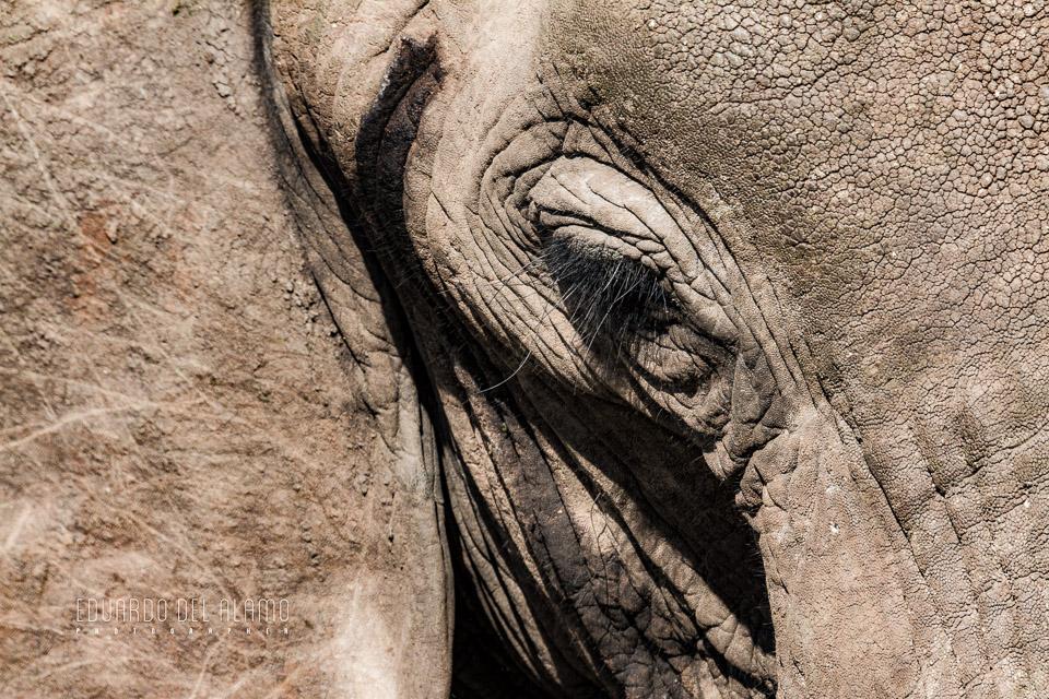 viaje-fotografico-kenia-masai-mara-safari-6.jpg