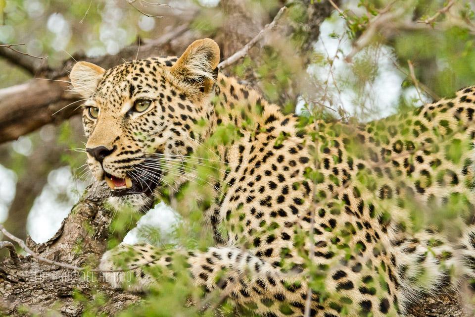 viaje-fotografico-kenia-masai-mara-safari-60.jpg