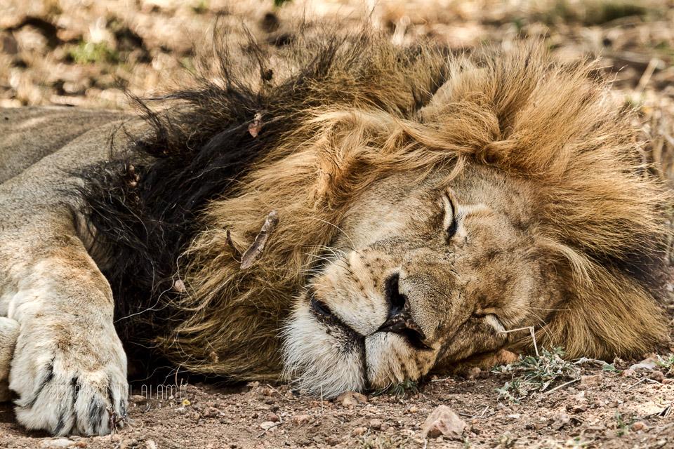 viaje-fotografico-kenia-masai-mara-safari-61.jpg