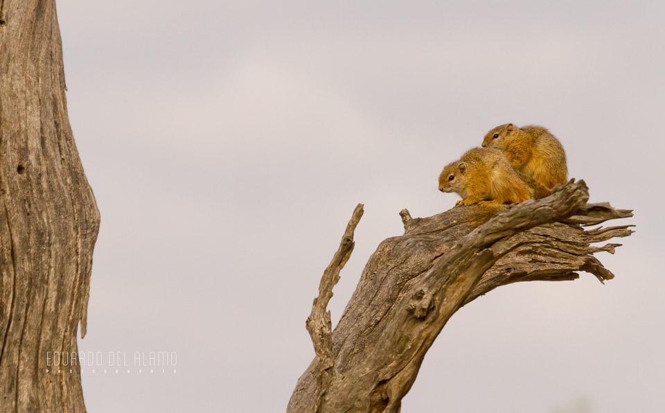 viaje-fotografico-kenia-masai-mara-safari-62.jpg