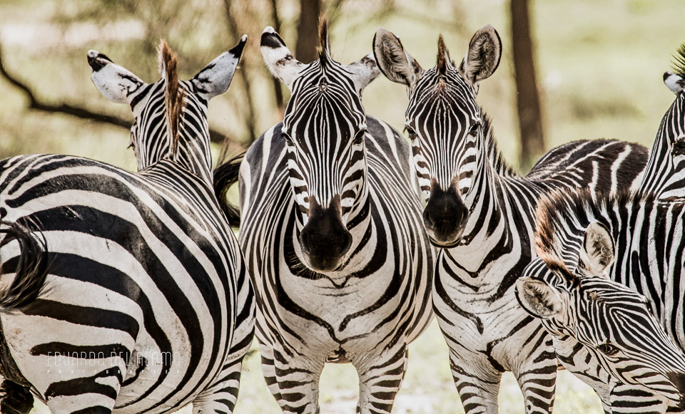 viaje-fotografico-kenia-masai-mara-safari-7.jpg