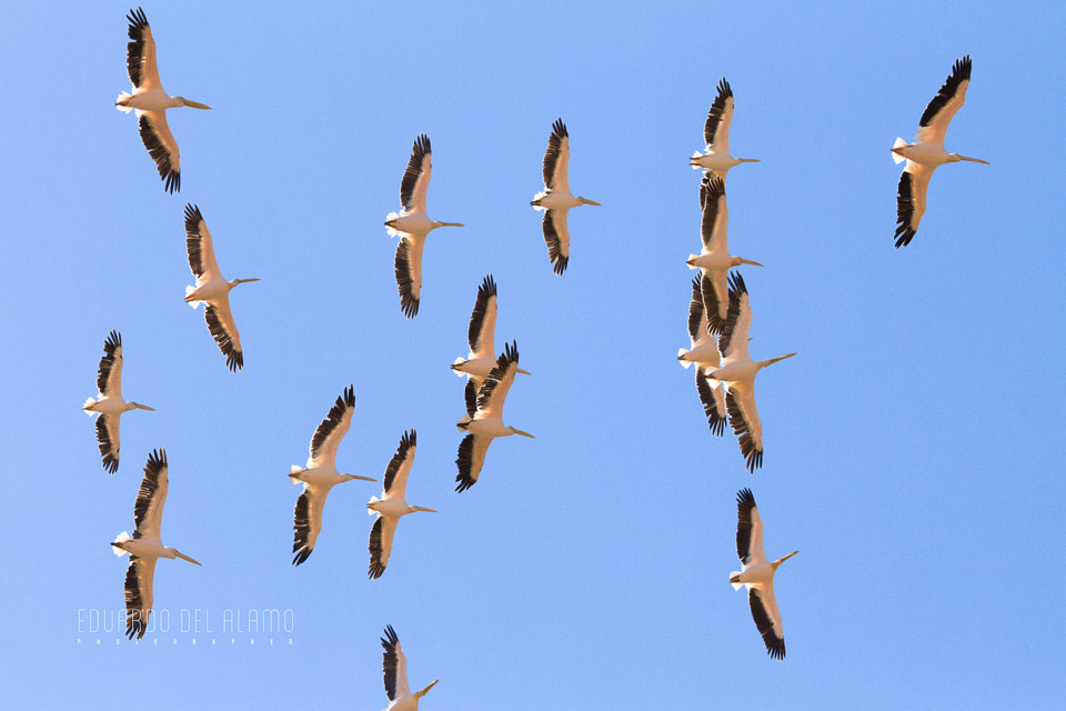 viaje-fotografico-kenia-masai-mara-safari-8.jpg