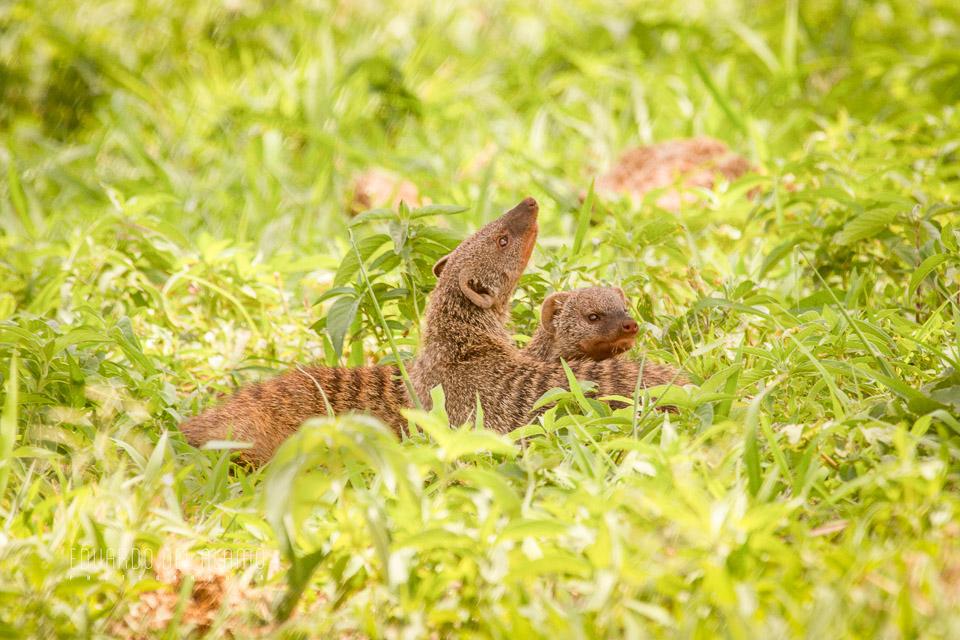 viaje-fotografico-kenia-masai-mara-safari.jpg