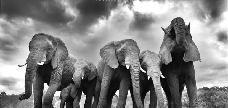 Charla y presentación nuevo viaje fotográfico safari y hides en Sudáfrica
